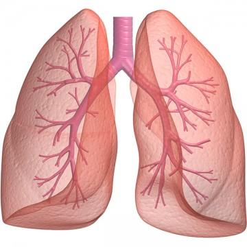 Wozu braucht es Atmung?